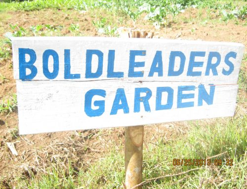 Recent Updates With BoldLeaders